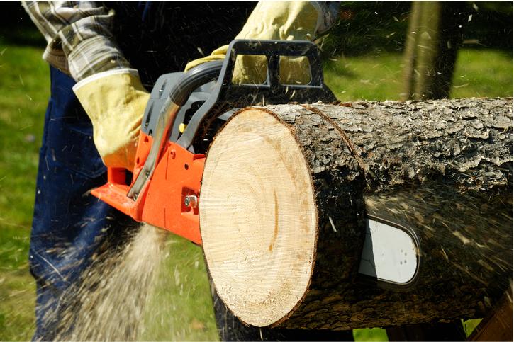 tree removal salt lake city ut