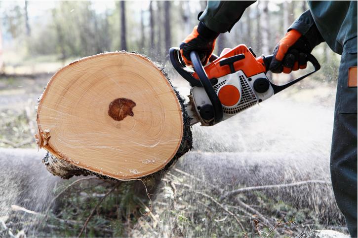 tree service in salt lake city ut