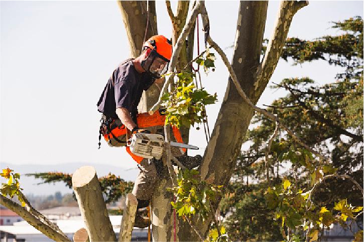 tree services in salt lake city ut