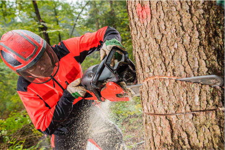 tree services in salt lake city